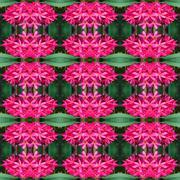 Stock Photo of Frangipani flower seamless pattern background