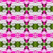 Dianthus chinensis (China Pink) seamless pattern background Stock Photos