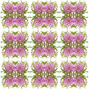 nobile orchid seamless pattern background - stock photo