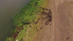 Aerial - flock of sheep before the shepherd built Stock Footage