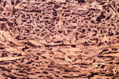 Stock Photo of Close up piece of wood damaged and eaten by termite