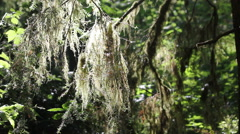 Moss blows in wind Stock Footage