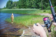 Fish caught on a hook on the background of the lake Stock Photos