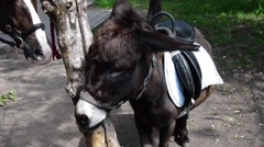 Stock Video Footage of donkey tied to a tree