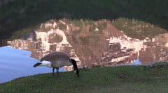 Maroon Bells Reflection and Goose Aspen Colorado Stock Footage