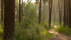 Two Cyclists on Forest Trail 2 Stock Footage
