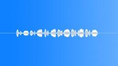 Wren Sound Effect
