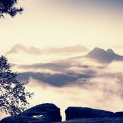 Stock Photo of Deep misty valley within daybreak. Foggy and misty morning on the sandstone v