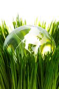Globe and green grass - stock photo