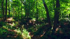Traveling Into Beautiful Forest of Sun and Shadow - stock footage