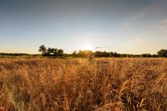 Large agricultural field with cereal Stock Photos