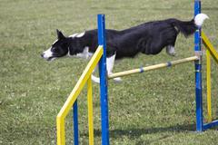 Dog Agility jumping Stock Photos