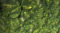 Green mineral Autunite from Washington State Stock Footage