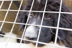 Ownerless dog in a cage Stock Photos