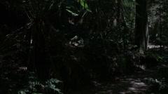 Mysterious walk along dappled rainforest path - stock footage
