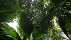 Coconut palm trees perspective view from floor high up. Stock Footage