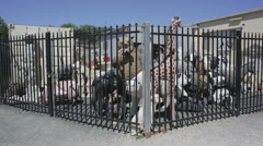 Animal sculptures behind bars Stock Footage