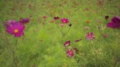 Flower in a meadow - stock footage