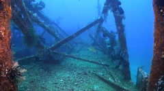 Wreck with plenty fish Stock Footage