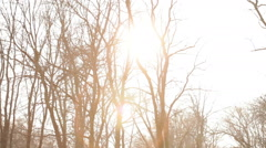 The sunlight penetrates through the bare trees Stock Footage