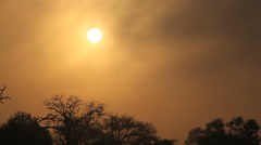Drifting mist at sunrise, nature, Sabie-Sand nature reserve, South Africa Stock Footage