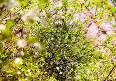 bright green leaves against a backdrop of trees - stock photo