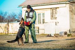 German Shepherd Dog training - stock photo