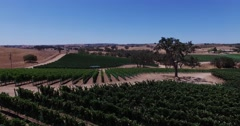 Aerial Grape fields and vineyards.  Wine production. Food Industry. - stock footage