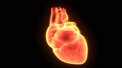 3D animation HUMAN HEART Stock Footage