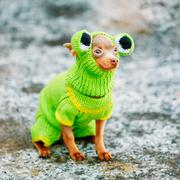 Beautiful Tiny Chihuahua Dog Dressed Up In Frog Outfit, Staying Stock Photos