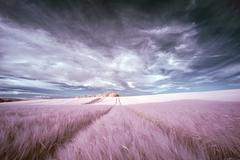 Stunning surreal false color infrared Summer landscape over agricultural fiel - stock photo