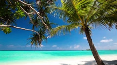 Palm trees over tropical lagoon with white beach Stock Footage