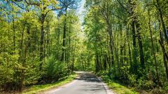 Stock Photo of Good Asphalt Forest Road In Sunny Summer Day. Lane Running Throu
