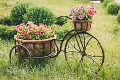 Decorative Vintage Model Old Bicycle Equipped Basket Flowers Gar - stock photo