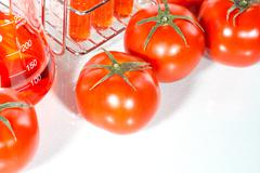 Stock Photo of vegetable test,  Genetic Modification,  tomato