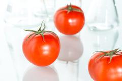 Stock Photo of genetic modification red tomato laboratory glassware on white