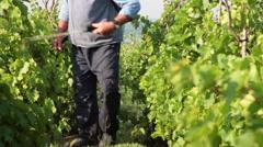 Vintner spraying fertilizer, insecticide, viticulture, vineyard, farmer, pump - stock footage