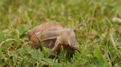 SLUG IN GRAS Stock Footage