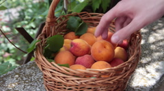 Splitting in two a ripe apricot and revealing core kernel  Stock Footage