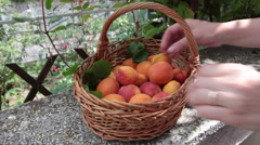Checking ripe apricots, healthy summer fruits, basket, hands, garden Stock Footage