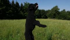Slow Motion: Dog Jumping Stock Footage