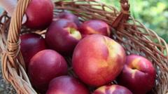 Picking up a ripe peach, basket, fresh fruits, farmer, hand, market Stock Footage