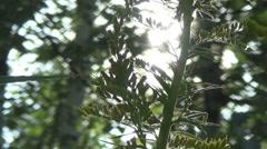 goldenrod, bee, sun - stock footage