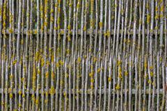 Old wooden mossy fence background Stock Photos