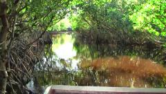 Boat ride through the swamps of the Everglades, Florida Stock Footage
