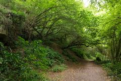 Path in Hornbeam temperate forest - stock photo