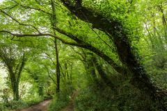 Hornbeam temperate forest - stock photo