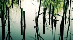 Rush and sticks in water reflections. Stock Footage