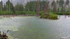 Hard rain falling on mossy mountain pond-2 Stock Footage