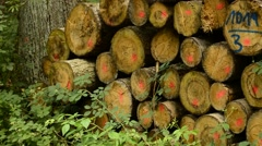 Wood stock in a forest Stock Footage
